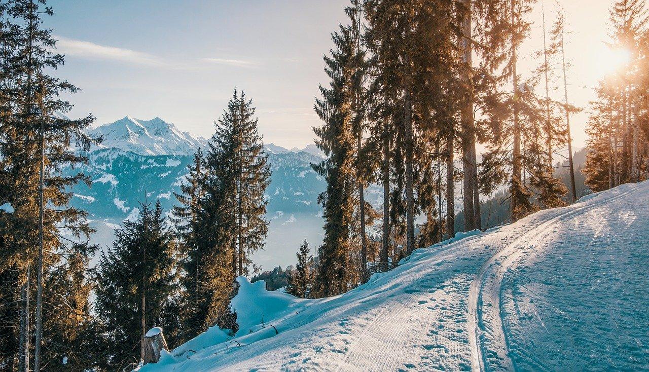 Langlaufskier von Bergzeit